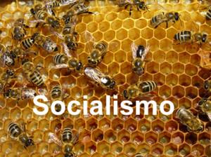 No podemos caer en el socialismo que engrandece el poder del Estado y reduce la autonomía individual