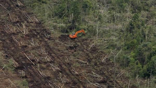 Tierra arrasada – 2 de julio 2015   Le doy mi palabra