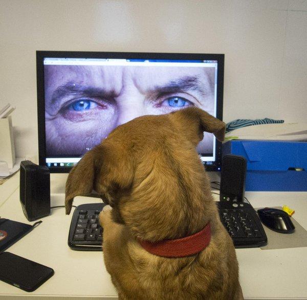 Resultado de imagen para balcarce perro